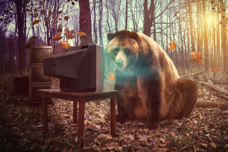 Lonely Bear Watching Television in Woods